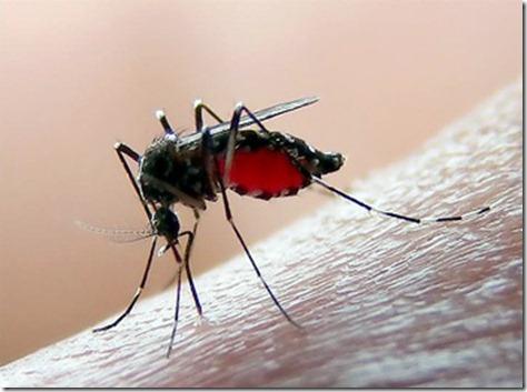 mosquito_picando