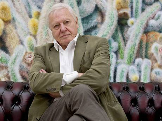 Sir David Attenborough. Photo: PA via The Independent
