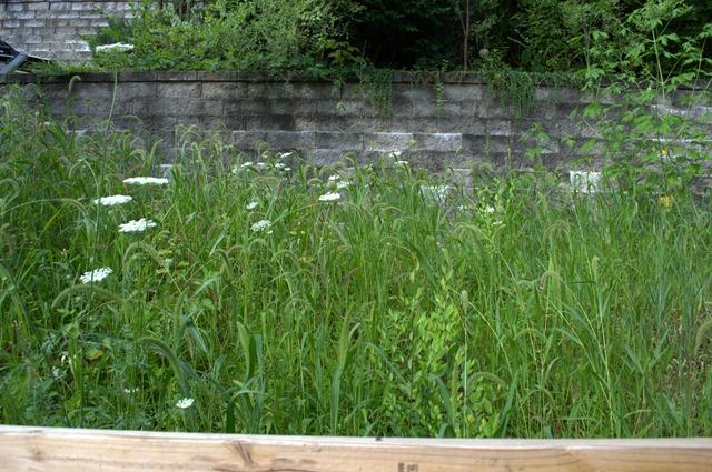 Wild Garden Aug 8