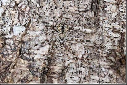 camouflageanimals321