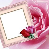 Rosa%2520rosa.jpg