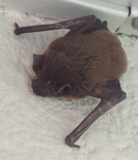 Bat….