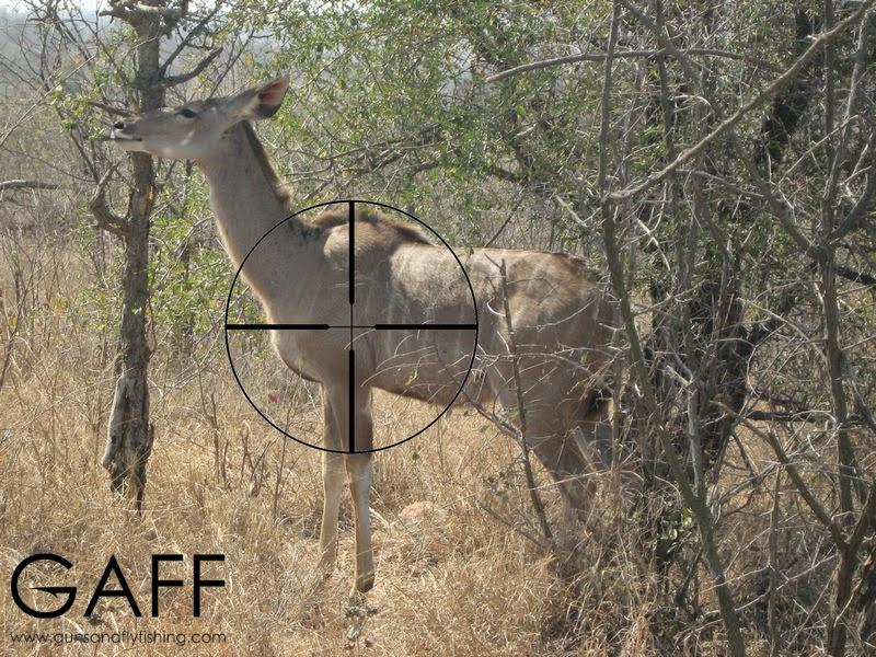 Kudu-hunting-shot-placement (4).jpg