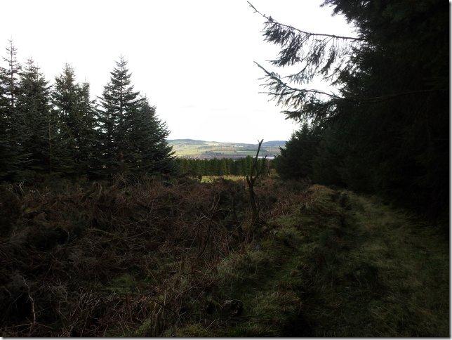 forest walk 9