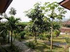 Jardin depuis notre petit bungalow