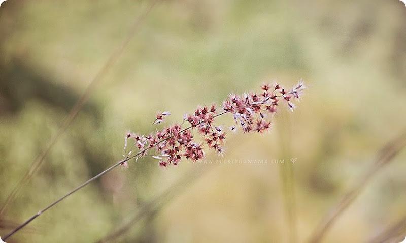Grass-(1)