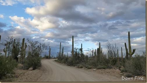 Saguaro NP West_067