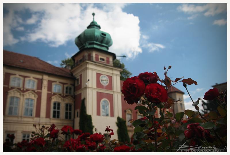Zamek w Łancucie. Róże, o które się dba, mogą trwać wiecznie.