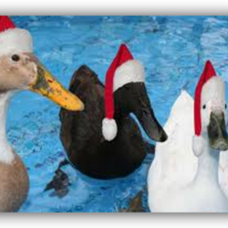 Merry Christmas from the Medical Quack(s)