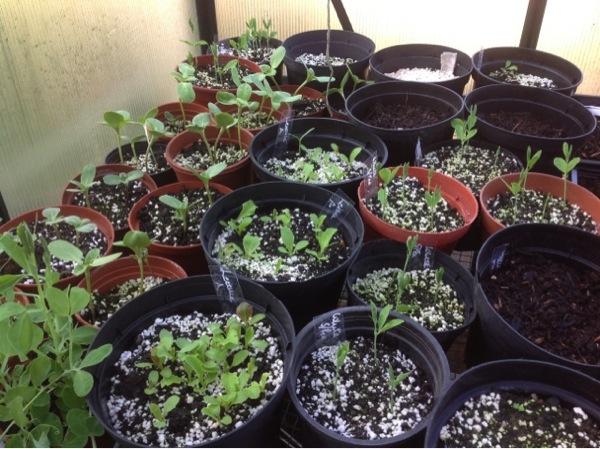 Seeds shoots