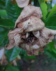 gardenia0627 (4)