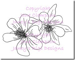 Aquilegia Flowers - Blog