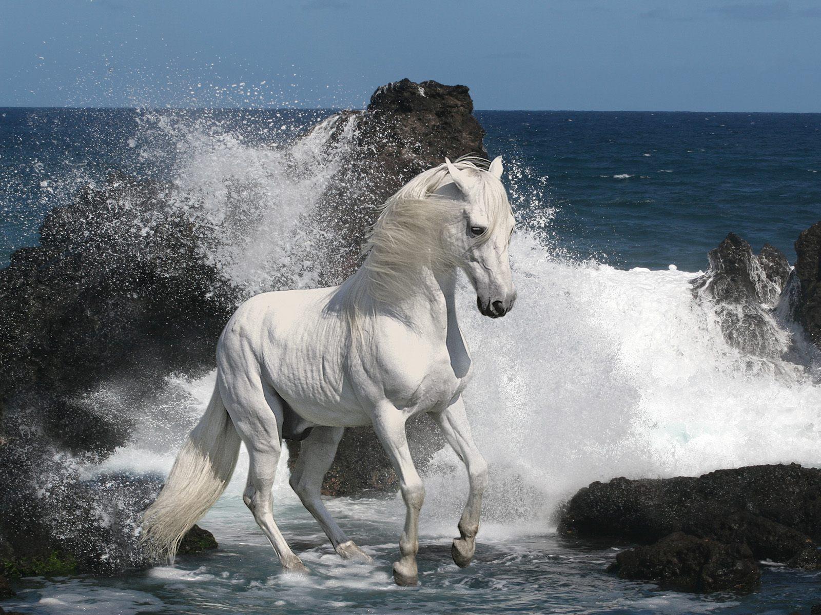 White Horse Thumbgal
