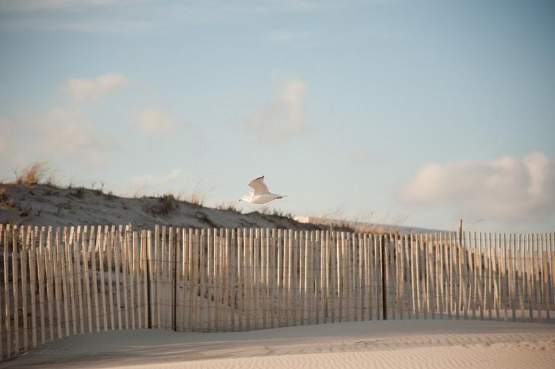 Long Island Beach-4103