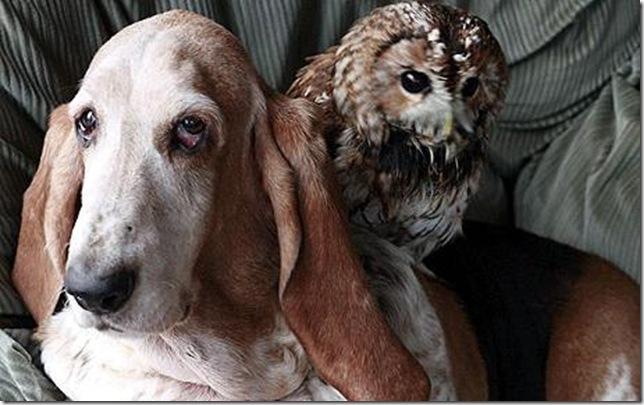 9 Hewan Berbeda Jenis yang Menjadi Sahabat Sejati_anjing-dan-burung-hantu