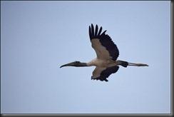 LL - bird in flight