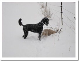 20120113_snow-day-outside_014