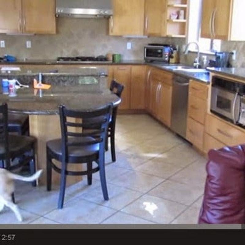 Τι κάνει ο σκύλος σας στο σπίτι