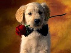 cachorrinho-romantico