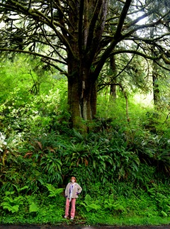 huge tree near the North Fork Yachats Bridge with Sue for scale