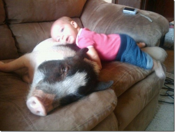 Crianças e animais (3)
