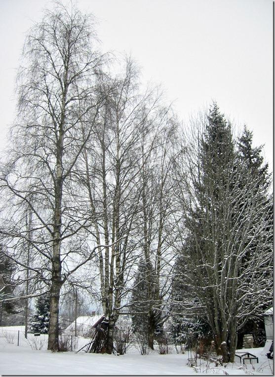 Trær2
