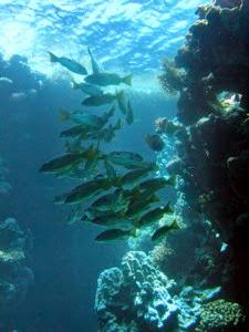 St John s Fish
