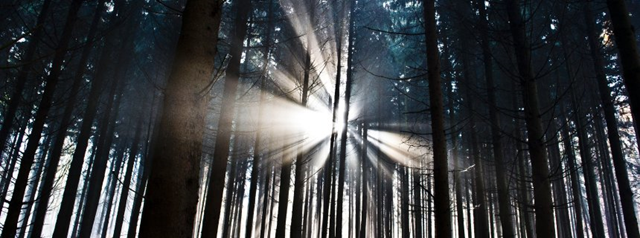 Germany's forests have become an attractive target for thieves as energy prices has increased. Photo: DPA