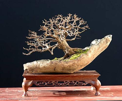 bonsais arvores em miniatura desbaratinando (15)