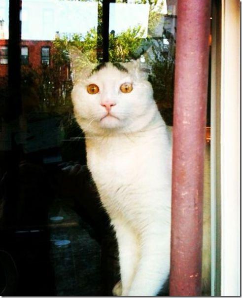 white-cat-eyebrows-7