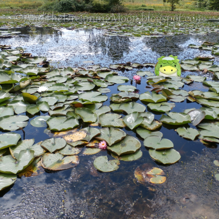 Kappa Pond
