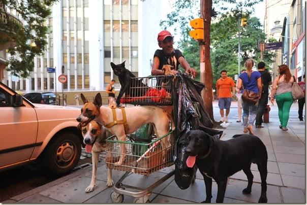 DESCRIÇÃO: Morador de rua de cuida de cachorros. Na foto Jeová.<br />