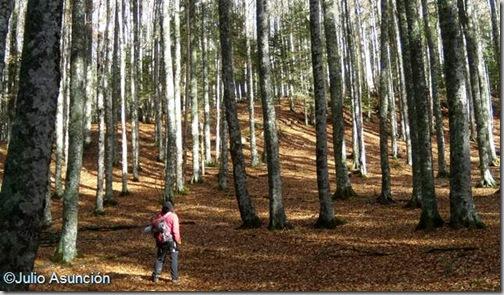 Collado de hayas en la Selva de Irati