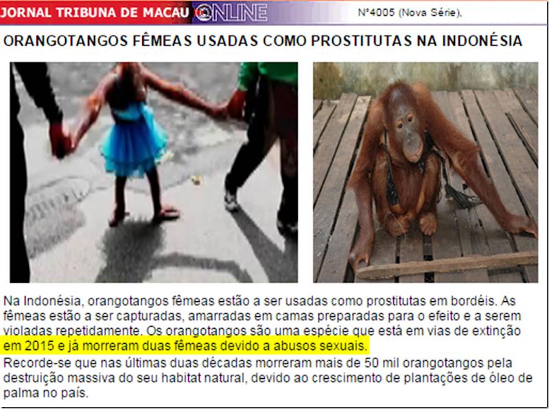 orangotango-macau