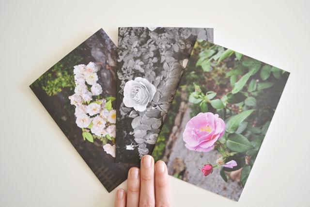 trio_flower_cards_ladyandlion_etsy