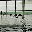 Dolphin Show at Shedd_Aquarium