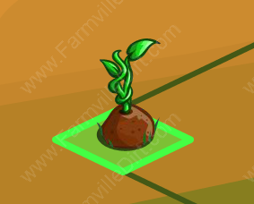 Farmville Magic Beanstalk on Farm
