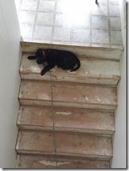 puppy training 07
