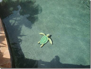 1.  Turtle tile