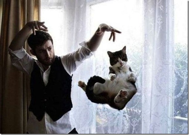 cats-timed-perfectly-23