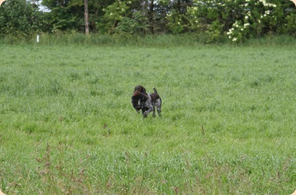 hundeapportering