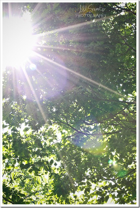 sunflare-4430