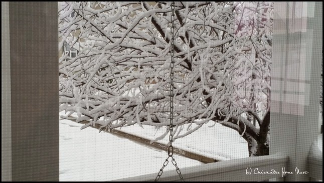 Snow, Winter Wonderland (9)
