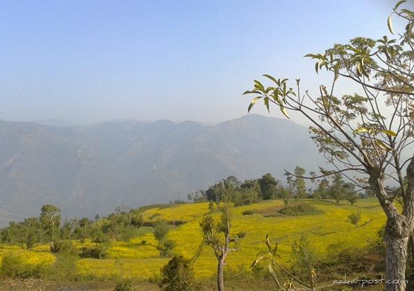 Chaudandi-Gadhi-Udayapur-Mustard-Fields