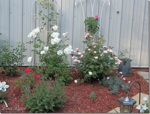 Rose_Garden3_May19