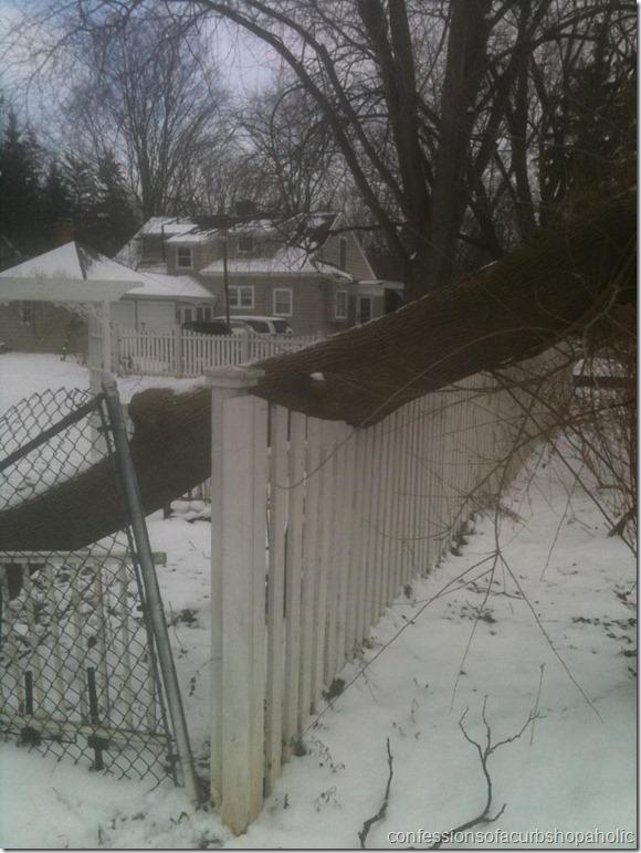 tree on fence 0305