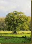 IMG_7683 oak field
