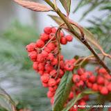 Colmar_2012-12-28_4113.JPG