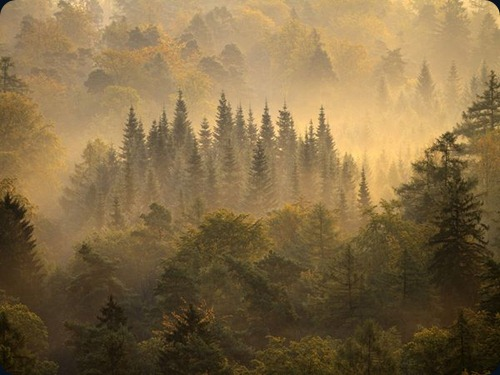morning-forest-germany