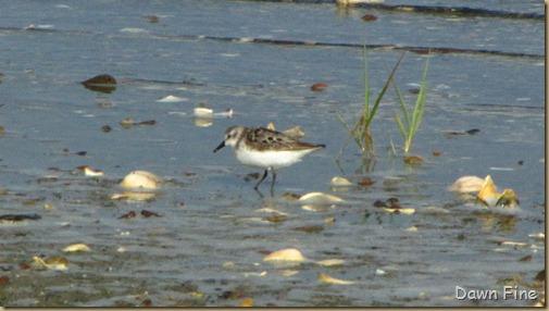 birding south beach_011